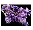 lavender-small